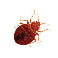 Bed bug control at Batzner Pest Control in Wisconsin - Serving Green Bay, Oshkosh, Madison, Racine, New Berlin and surrounding areas