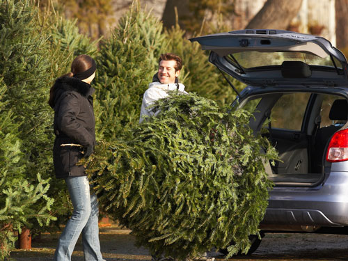 Shake out your Christmas tree to expel insects before bringing it into your New Berlin WI or Oshkosh WI home - Batzner Pest Control